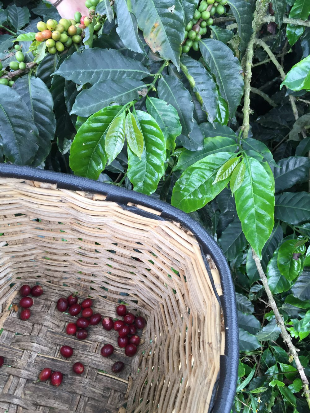 A Photographic Journey Through Coffee Production