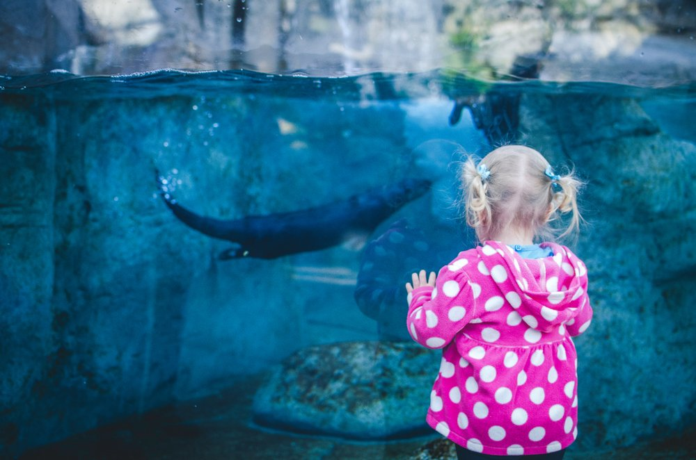little girl in pink and white polka dots standing in front of exhibit at the Tennessee aquarium