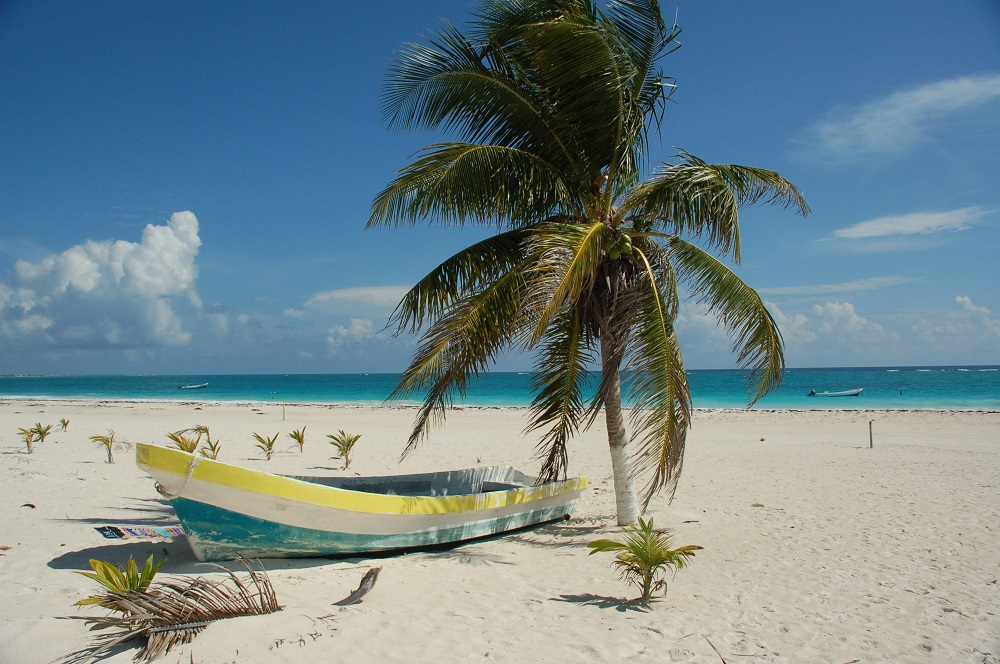 tropical beach with one palm tree next to a blue and yellow boat on the sand