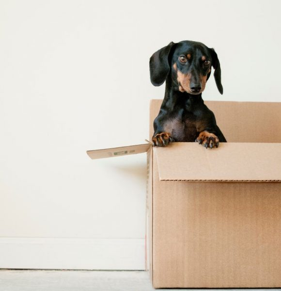 Moving Tips + Countdown: When To Do What So You Don't Go Crazy