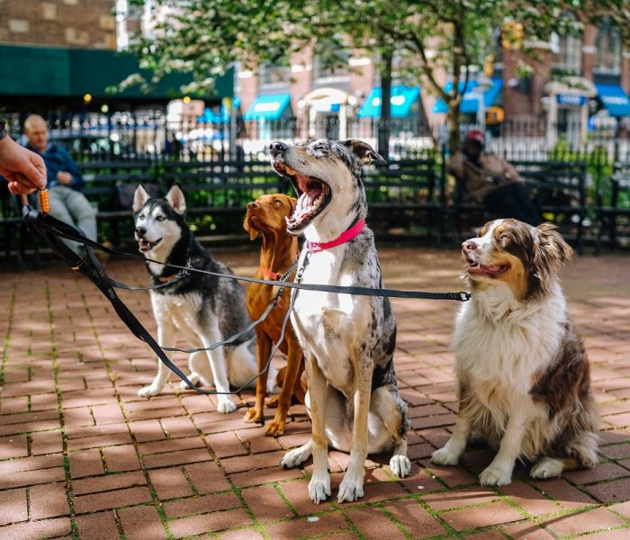 10 Dog-Friendly Cities in the US to Visit With Your Pooch