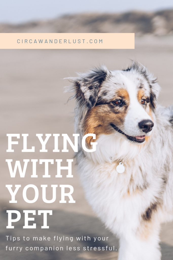 traveling with a pet pinterest cover