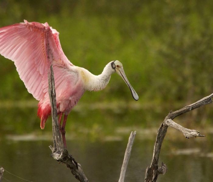 Sian Ka'an Biosphere Reserve, A Bird Watchers Paradise