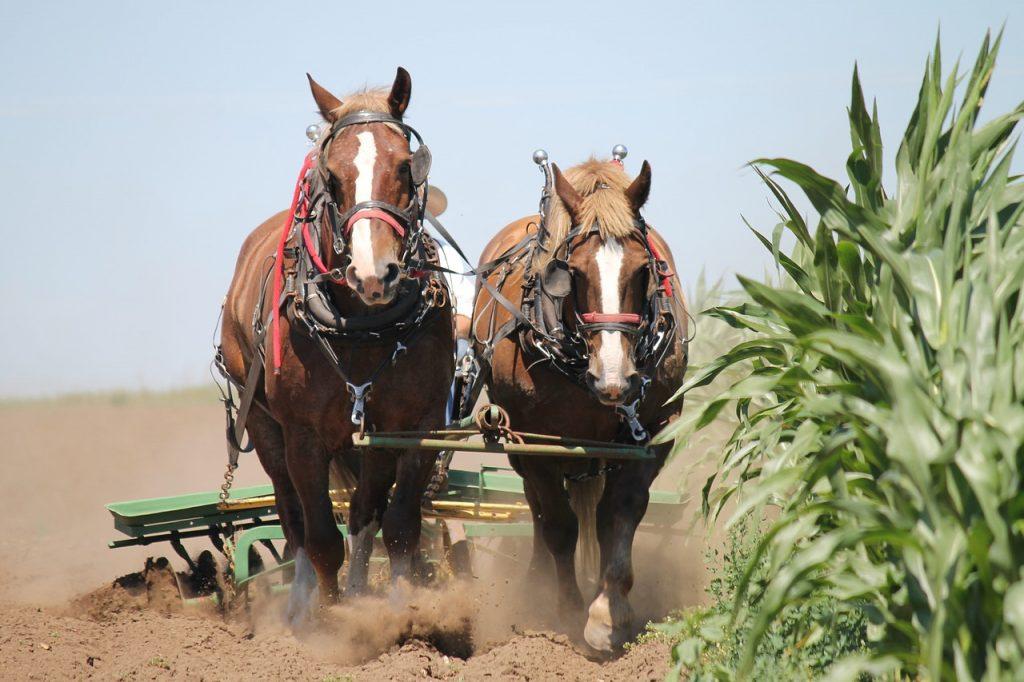 horses plowing field