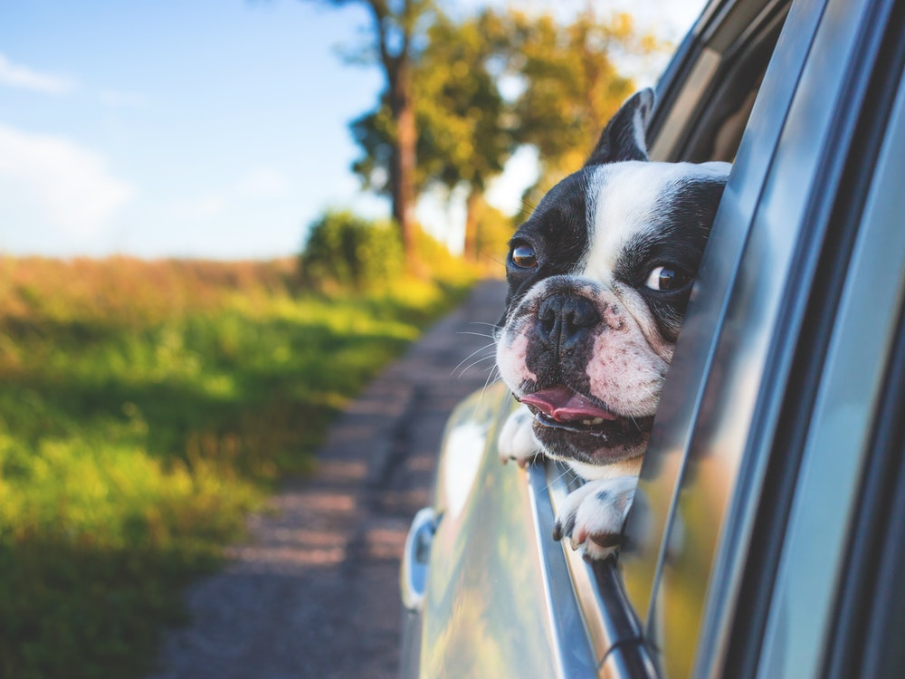 Everything You Need To Know About How To Travel With A Dog