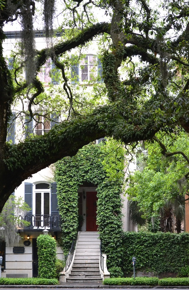 Ivy lined house in Savannah Georgia with tree in foreground