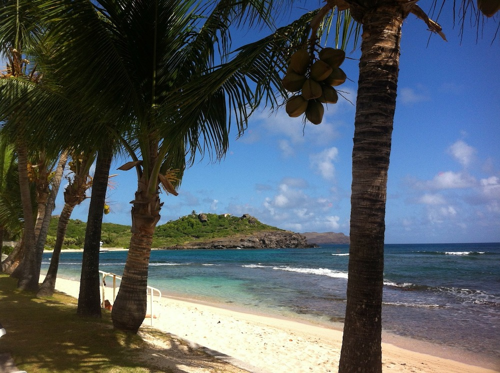 palm trees on the beach in St Barts