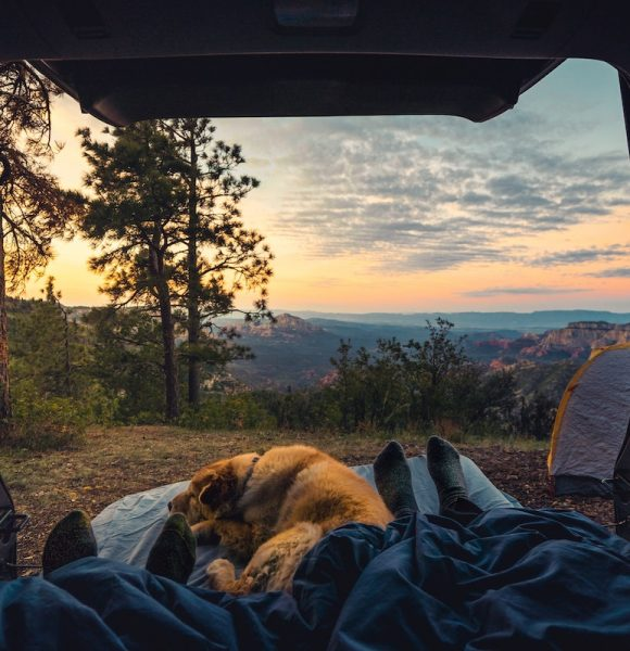 10 Tips For Camping With A Dog